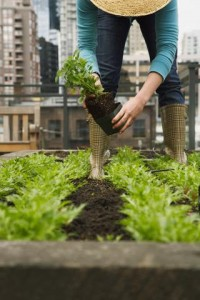 Woman Planting in Roof Garden